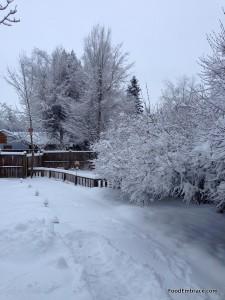 Snowy Back Yard