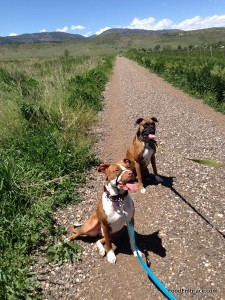 Penny and Avery on the trail